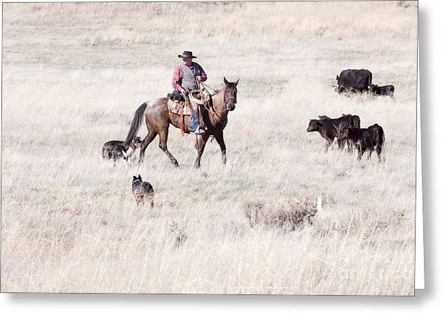 ist Working Photo Photographs Greeting Cards - Cowboy Greeting Card by Cindy Singleton