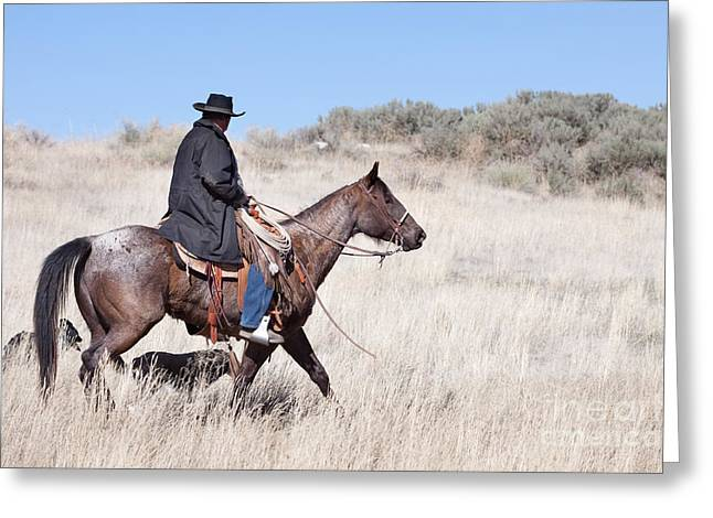 Working Cowboy Photographs Greeting Cards - Cowboy on Horseback Greeting Card by Cindy Singleton