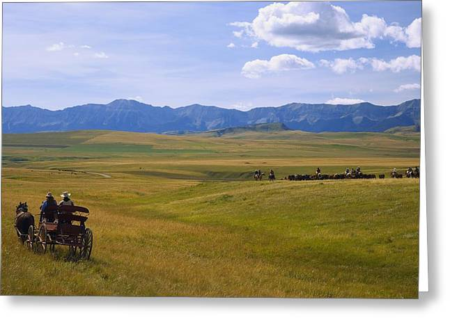 45-49 Years Greeting Cards - Cowboys And Wagon On A Cattle Drive Greeting Card by Carson Ganci
