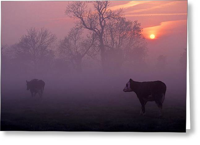 Sunrise Greeting Cards - Cows At Sunrise Greeting Card by Meirion Matthias