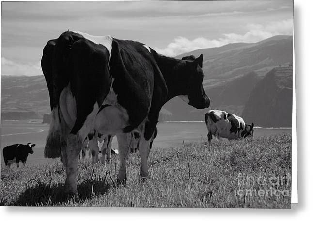 Azoren Greeting Cards - Cows Greeting Card by Gaspar Avila