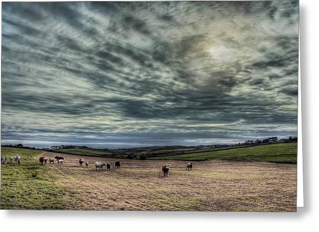 County Clare Greeting Cards - Cows in an Irish Pasture Greeting Card by Noah Katz