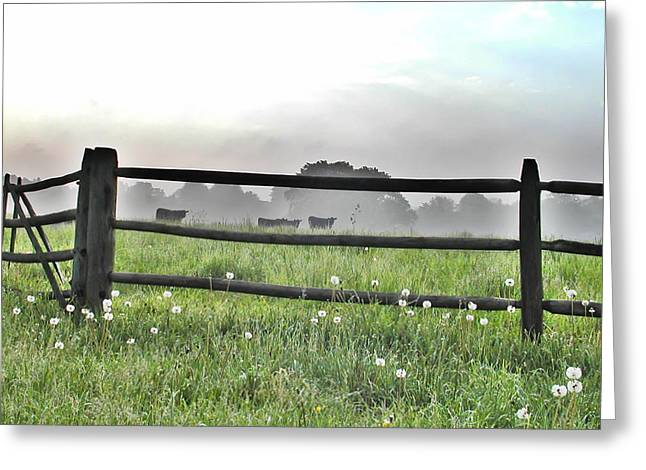 Dandilion Greeting Cards - Cows in Field Greeting Card by Bill Cannon