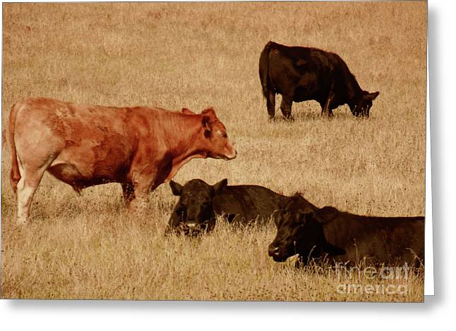 Cows Greeting Card by Methune Hively