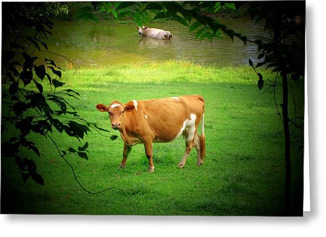 Lamdscape Greeting Cards - Cows Greeting Card by Michael L Kimble
