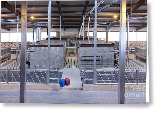 Cowshed Interior Greeting Card by Jaak Nilson