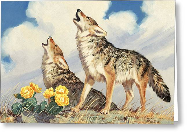 Characters And Scenes In History And The Arts Greeting Cards - Coyotes Howl To The Setting Sun Greeting Card by Walter A. Weber