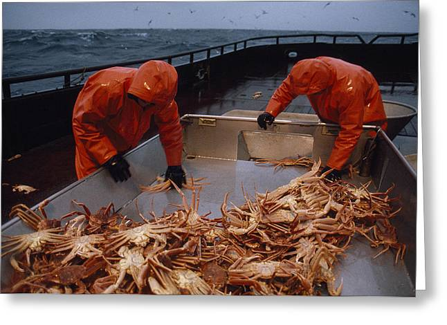 Food Industry And Production Greeting Cards - Crab Fishermen Sorting Their Catch Greeting Card by Chris Johns