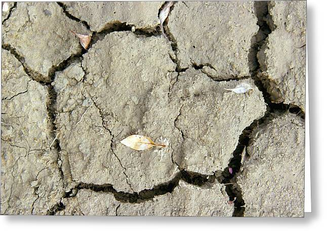 Axels Greeting Cards - Cracked Mud, Canadian Arctic Greeting Card by Dr Juerg Alean