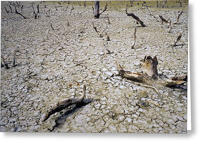 Desertification Greeting Cards - Cracked Soil Greeting Card by Carlos Dominguez