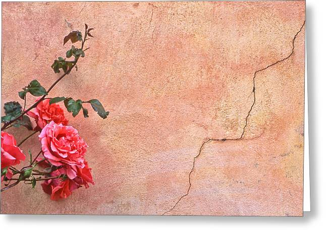 Tom Cory Greeting Cards - Cracked Wall and Rose Greeting Card by Tom and Pat Cory