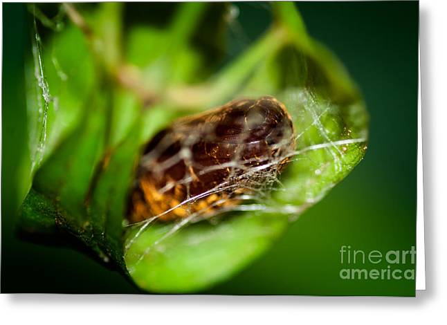 Pupa Greeting Cards - Cradle of a Butterfly Greeting Card by Venura Herath