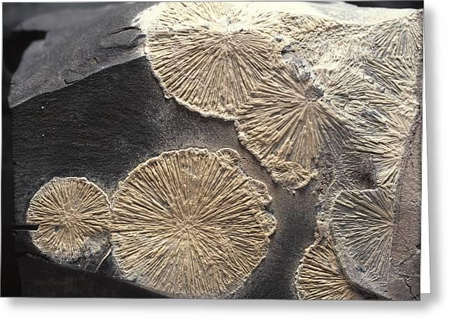 Calcium Phosphate Greeting Cards - Crandallite Mineral Greeting Card by Dirk Wiersma