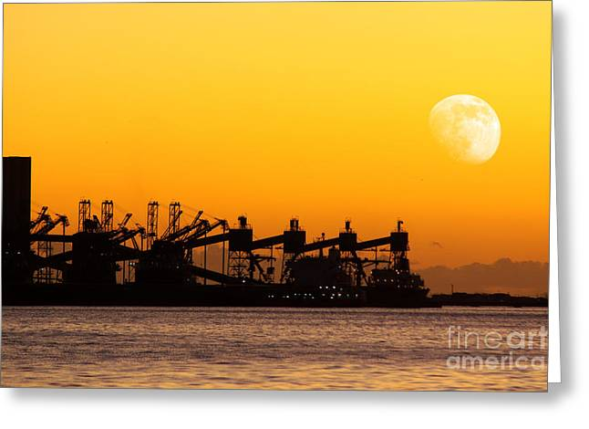 Cranes at Sunset Greeting Card by Carlos Caetano