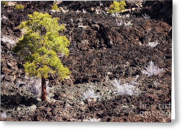 Craters Greeting Cards - Crater Tree Greeting Card by John Rizzuto