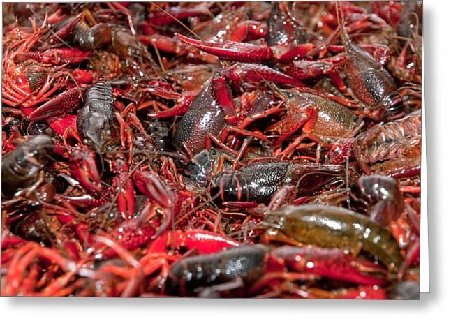Crawfish Greeting Cards - Crawfish Greeting Card by Jim DeLillo