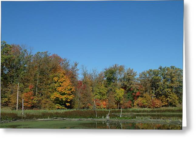 Crisp Fall Day In Minnesota Greeting Card by Brian  Maloney