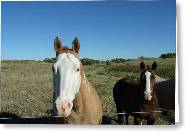 Athletic Love Greeting Cards - Crisp Horse Morning Greeting Card by Brian  Maloney