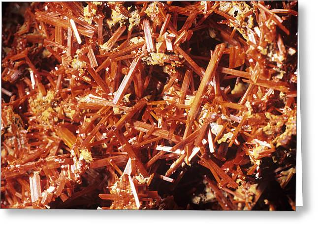 Lead Greeting Cards - Crocoite Mineral Crystals Greeting Card by Dirk Wiersma