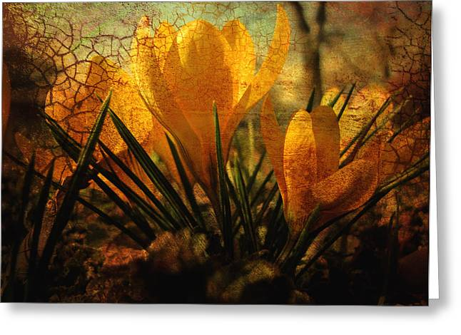Crocus in Spring Bloom Greeting Card by Ann Powell