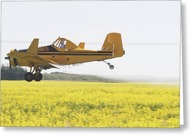 Crop Dusters Greeting Cards - Crop Duster Spraying Flowering Canola Greeting Card by Michael Interisano