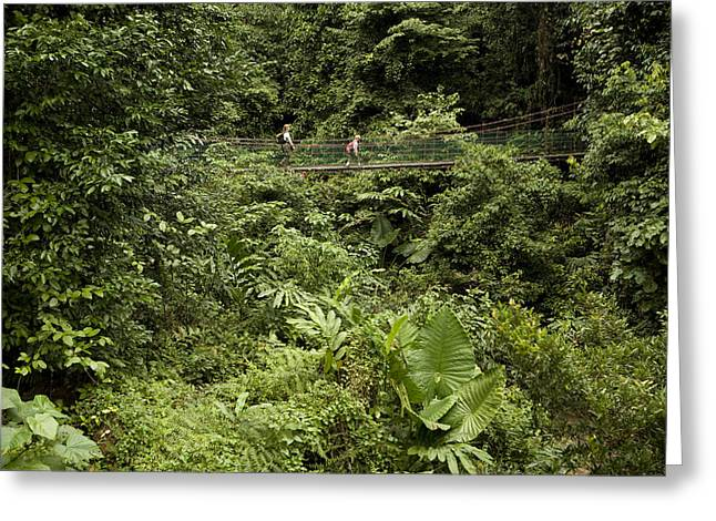 Lush Green Greeting Cards - Crossing A Suspension Bridge Greeting Card by Tim Laman