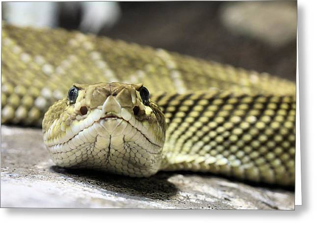 Rattle Snakes Greeting Cards - Crotalus basiliscus Greeting Card by JC Findley