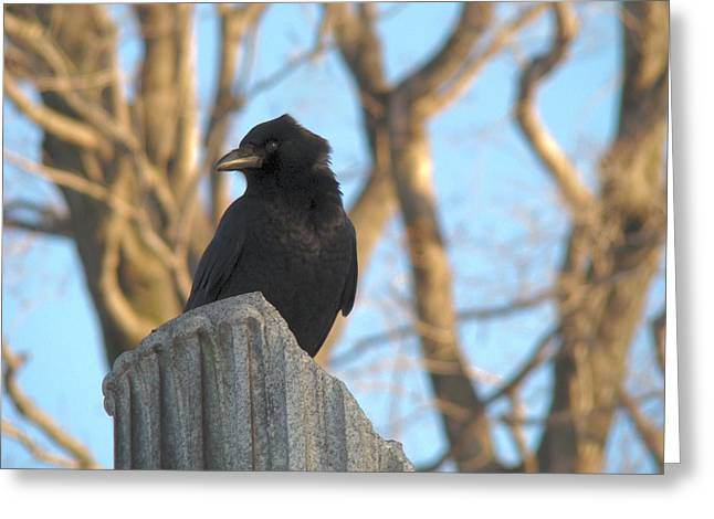 Crow In Wind Greeting Card by Gothicolors Donna