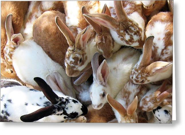 Soft Fur Greeting Cards - Crowd of Rabbits Greeting Card by Svetlana Sewell