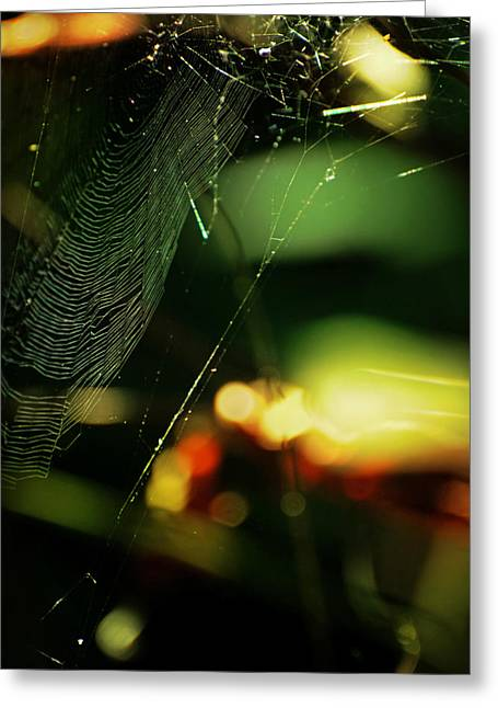 Spiderweb Greeting Cards - Crownd Greeting Card by Rebecca Sherman