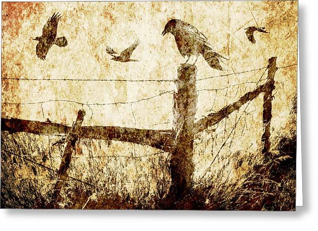 Randy Greeting Cards - Crows and the Corner Fence Greeting Card by Randall Nyhof