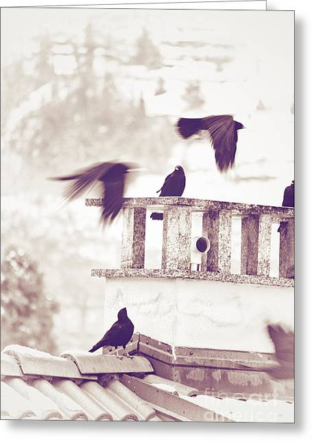 Wintry Photographs Greeting Cards - Crows on a roof Greeting Card by Silvia Ganora