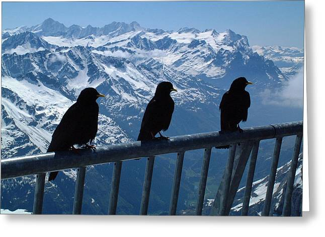 Berne Canton Greeting Cards - Crows on top of Mount Titlis Switzerland Greeting Card by Joseph Hendrix