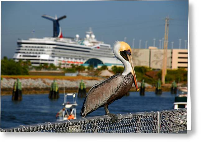 Levi Greeting Cards - Cruising Pelican Greeting Card by Susanne Van Hulst