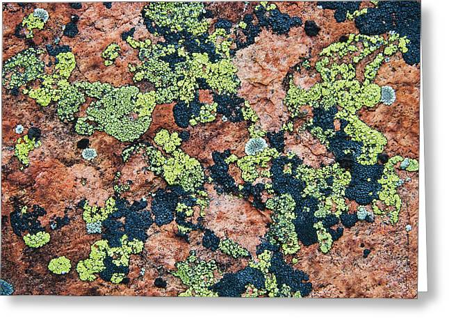 Lichen Image Greeting Cards - Crustose Lichens On Granite, Killarney Greeting Card by Mike Grandmailson