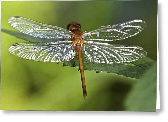 Bugs Greeting Cards - Crystal Wings Greeting Card by Evelina Kremsdorf