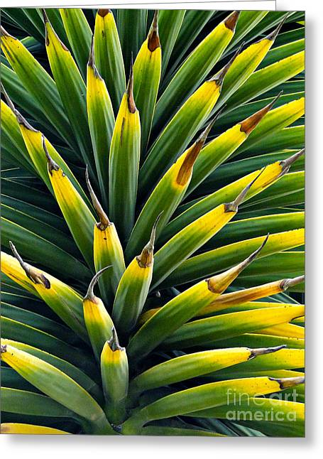 Green Foliage Greeting Cards - Cuenca Tropical Tree Greeting Card by Al Bourassa