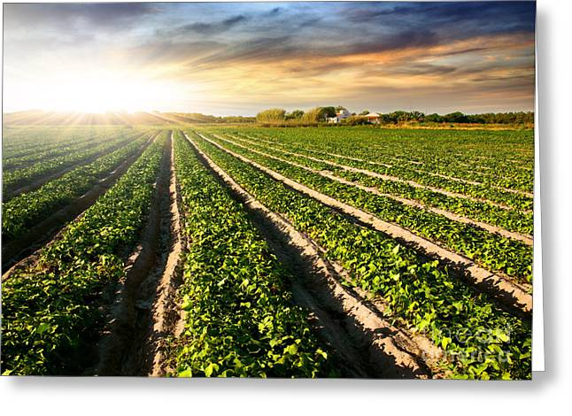 Cultivated Land Greeting Card by Carlos Caetano