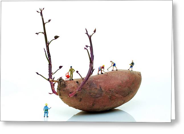 Print Card Digital Art Greeting Cards - Cultivation on a sweet potato Greeting Card by Paul Ge