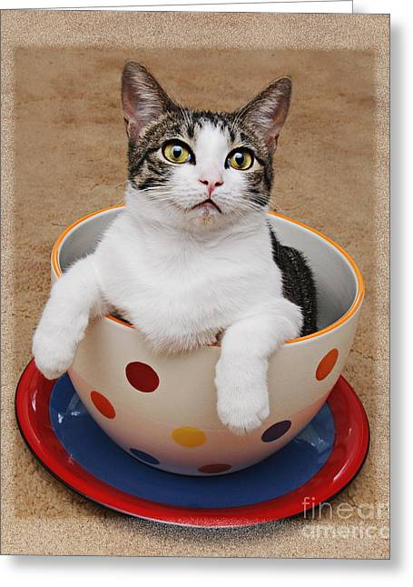 Tilly Greeting Cards - Cup O Tilly 3 Greeting Card by Andee Design