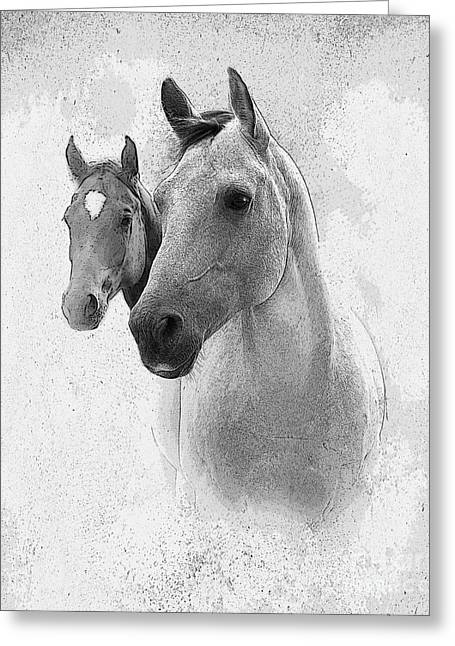 Quarterhorses Greeting Cards - Curiosity Greeting Card by Betty LaRue