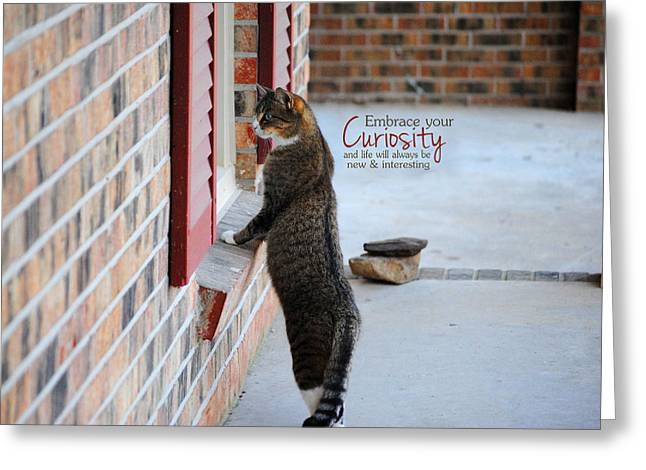 CURIOSITY Inspirational Cat Photograph Greeting Card by Jai Johnson