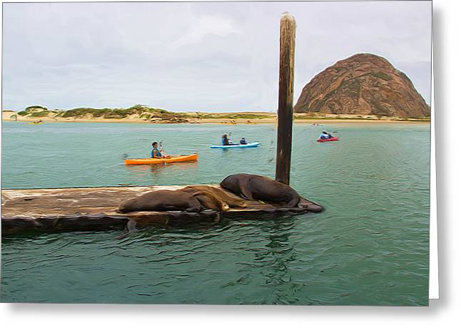 Morro Bay Greeting Cards - Curious About Sea Lions Greeting Card by Heidi Smith