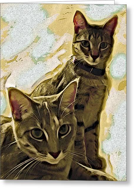 Print Card Digital Art Greeting Cards - Curious Cats Greeting Card by David G Paul