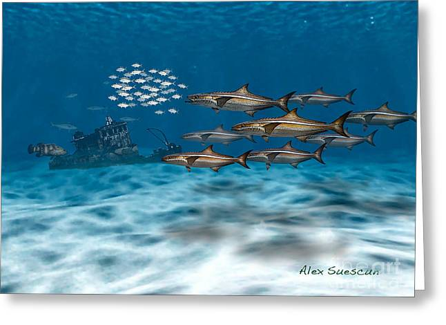 Wahoo Greeting Cards - Curious Cobia Greeting Card by Alex Suescun