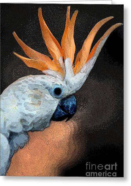 Digital Manipulation Art Greeting Cards - Curious Cockatoo  Greeting Card by Norman  Andrus