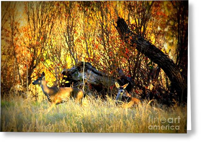 Cautious Greeting Cards - Curious Deer Greeting Card by Carol Groenen