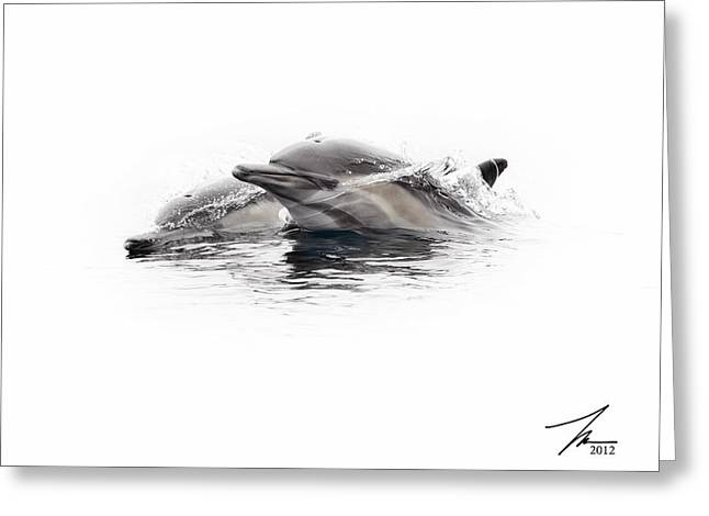 Ventura California Greeting Cards - Curious Dolphins Greeting Card by Steve Munch
