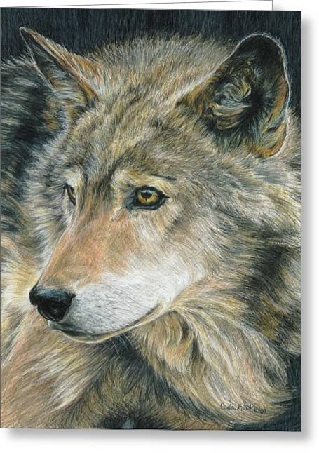 Wolves Drawings Greeting Cards - Curious Eyes Greeting Card by Carla Kurt