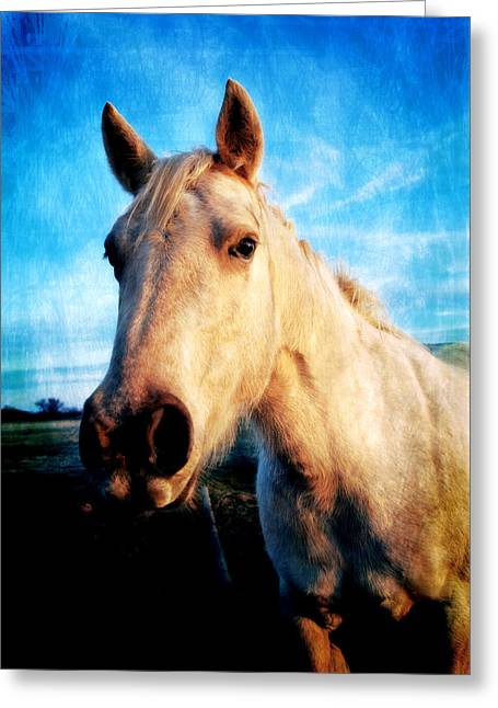 Art Horses Greeting Cards Greeting Cards - Curious Horse Greeting Card by Toni Hopper